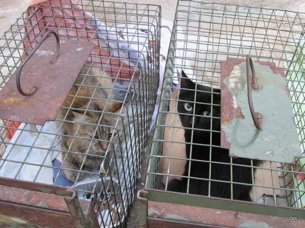 Katzenhilfe Olli eV für Malta