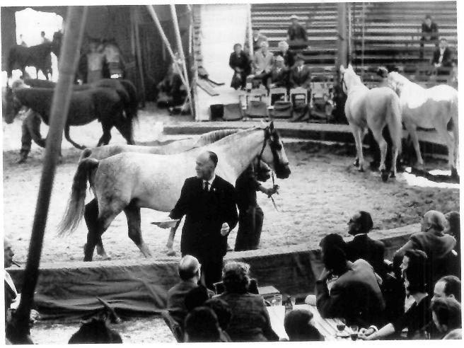 """Mit der Veranstaltung """"Tiere gehen zur Schule"""" trat ich gewissermassen in die Fussstapfen des Tierpsychologen Prof. H. Hediger,  der dasselbe früher bisweilen auch gemacht hat (hier ein Bild aus dem Jahre 1965)."""