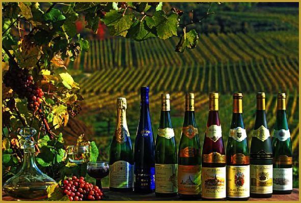 Produits de la vigne