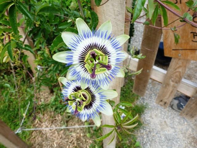 Wesserling: les jardins