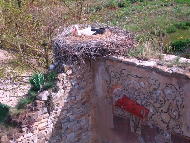 Une cignogne à Ungersheim