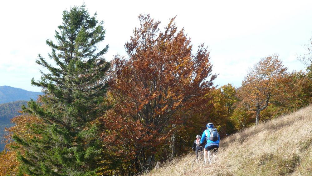 VTT au col du Morfeld dans les Hautes Vosges