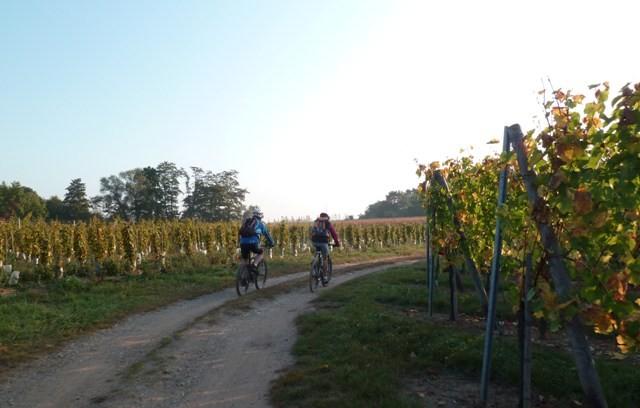 randonnée dans les vignes Wuenheim sept 2013