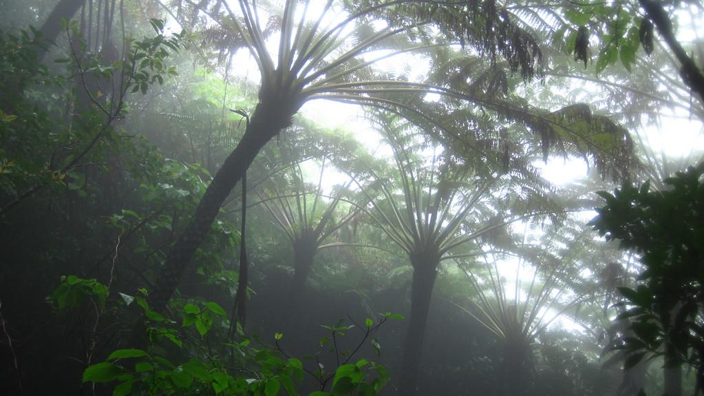 霧に煙る雲霧林