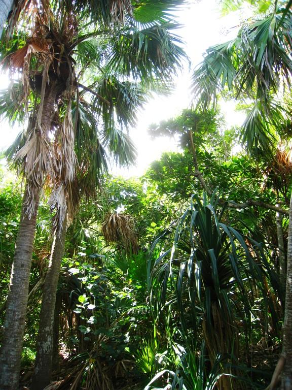 南崎の代表的な植生