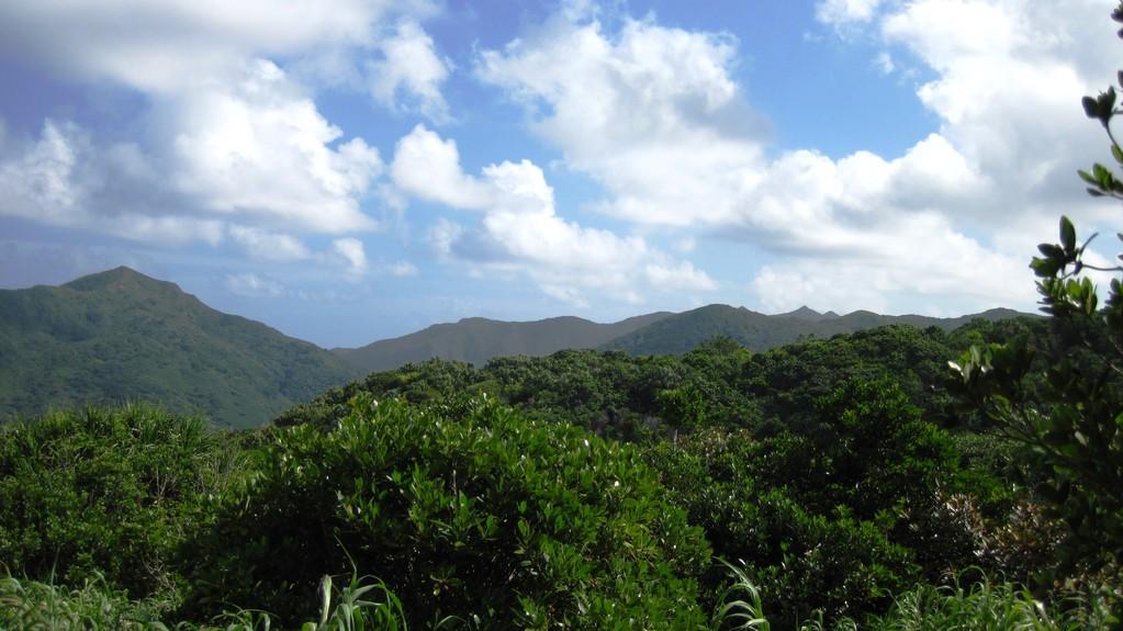 西台より見た乳房山