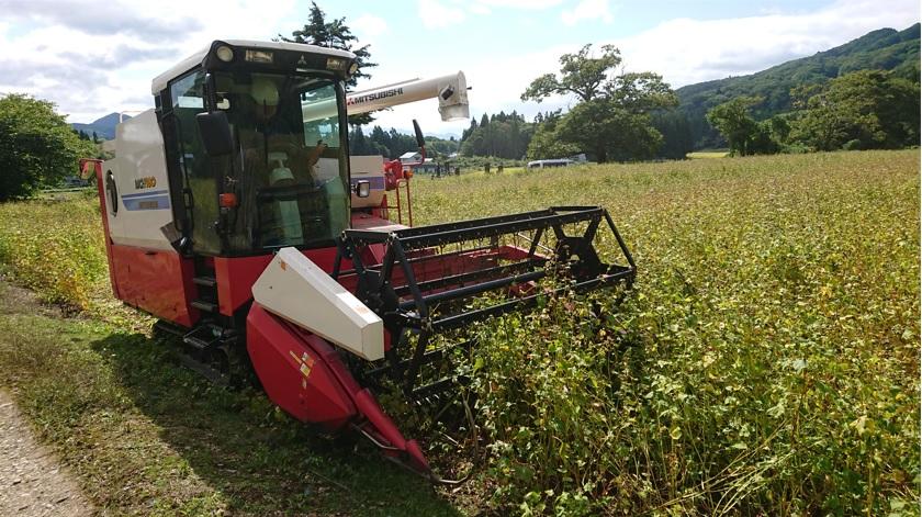 蕎麦刈、始まりました!