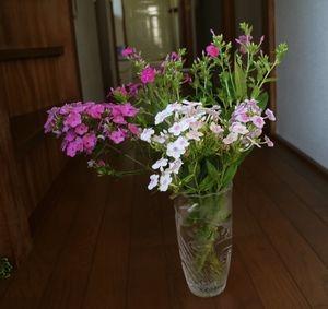 散歩道で咲いていた花