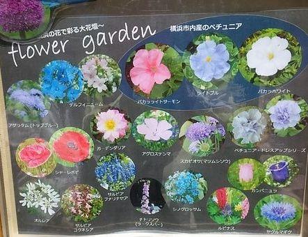 大花壇に咲いている花
