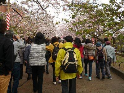 桜の通り抜けの人々