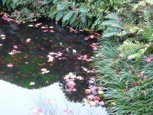 池に落ちた紅葉