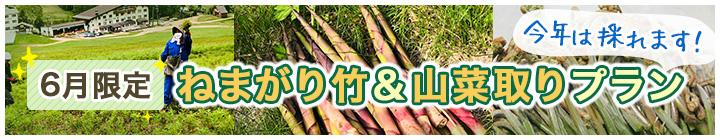 6月限定 ねまがり竹&山菜取りプラン
