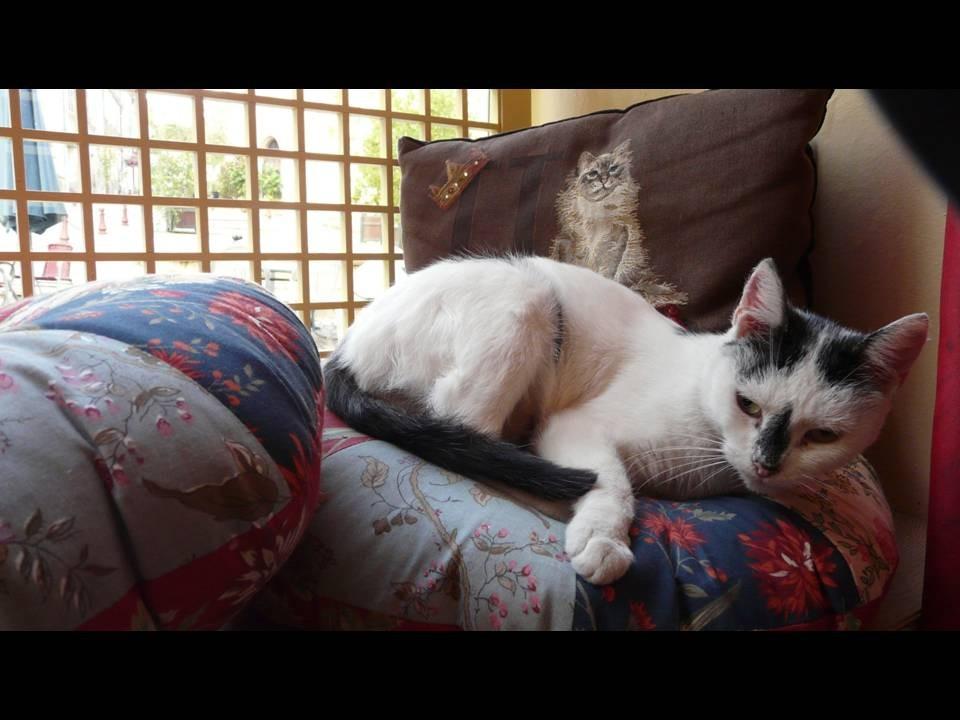 ... chat sur les coussins, accessoire indispensable pour le thé...