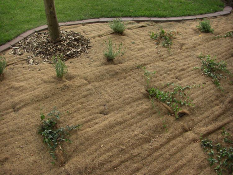 Protection de plantation paysagère avec le paillage MULCHMAT