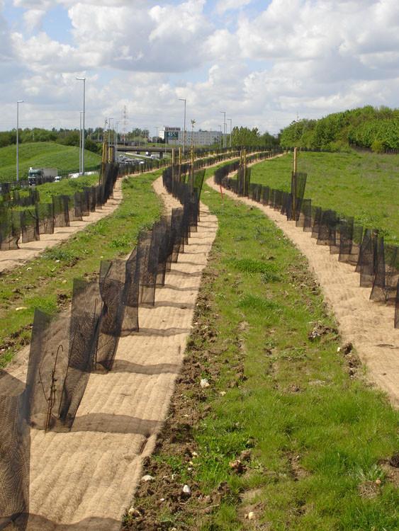 Protection de plantation autoroutière avec le paillage MULCHMAT