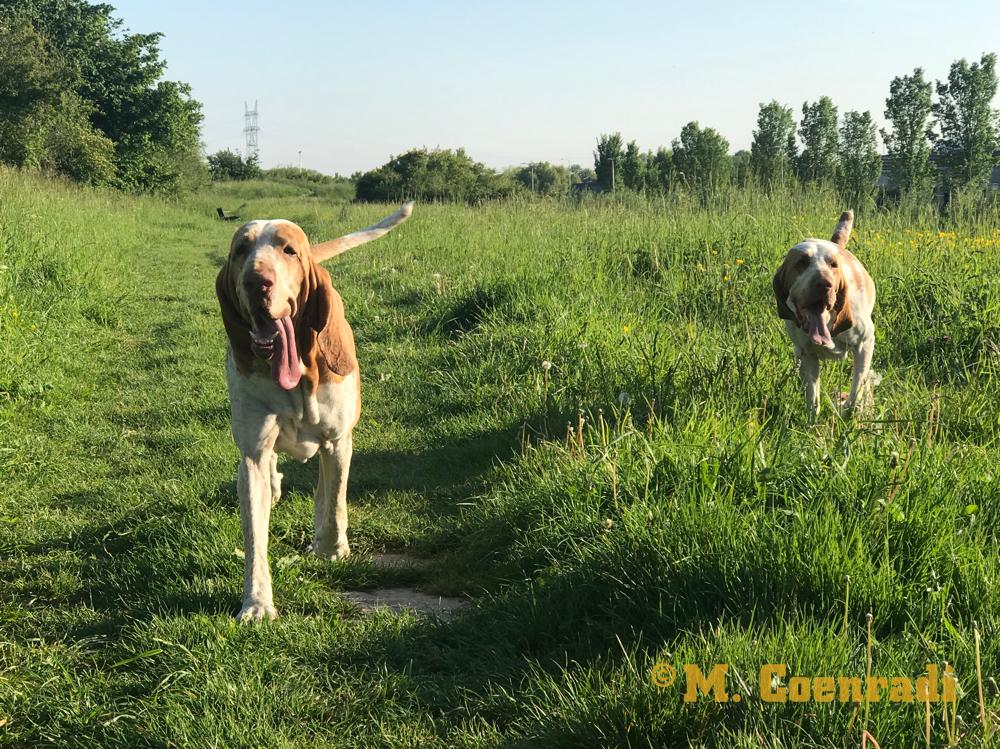 Hier zijn Mosé en Oren in een uitlaatgebied 5 minuten van huis dus haast in de achtertuin!