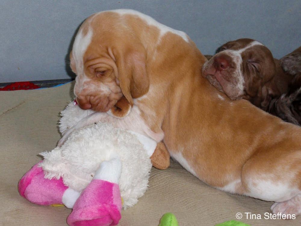 Mosé 28-06-2011 hier is hij 27 dagen oud. Met zijn broer of zusje op zijn rug.