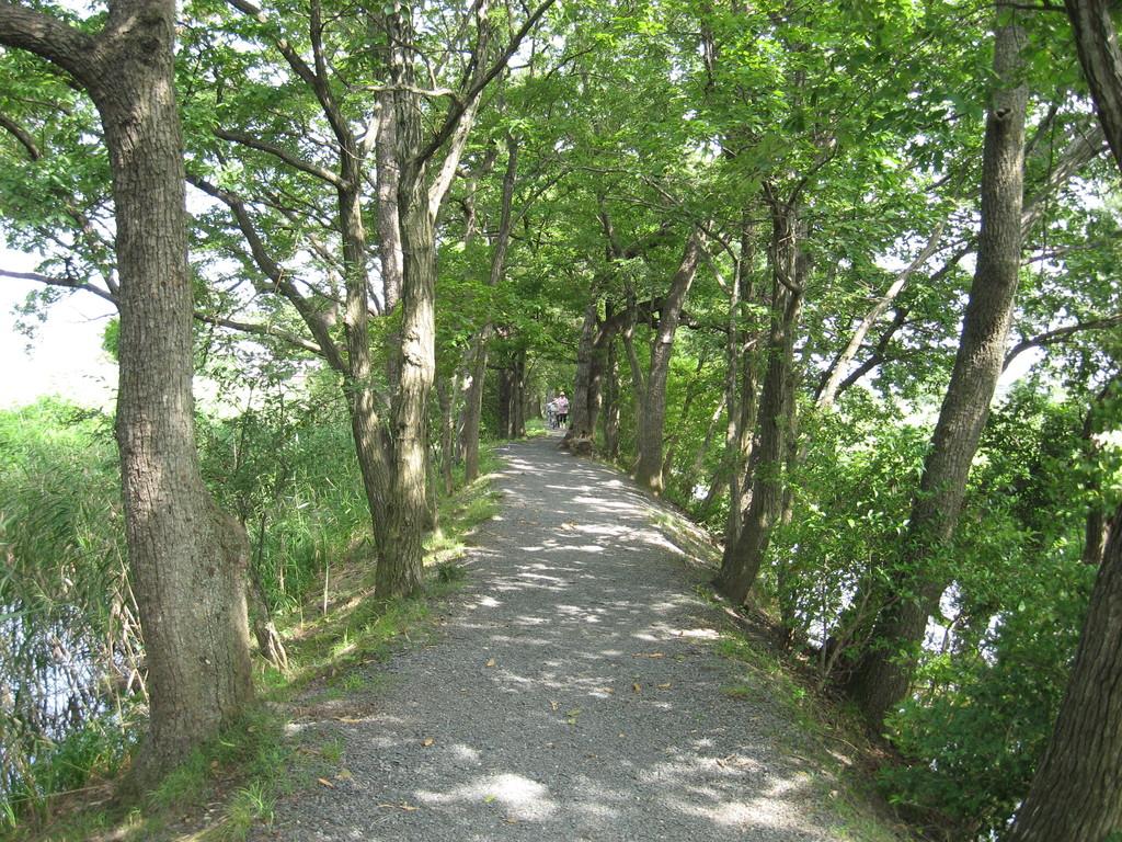 「夏」 くぬぎ並木遊歩道