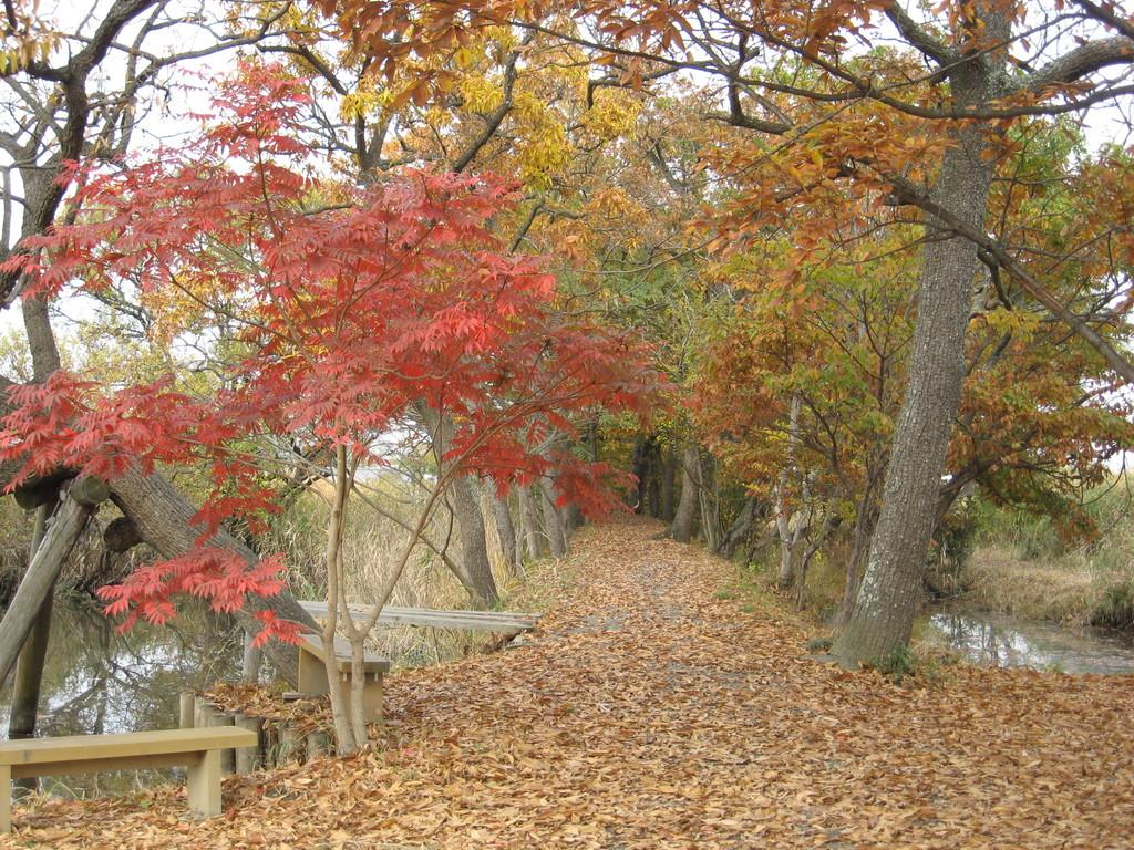 「秋」 くぬぎ並木遊歩道