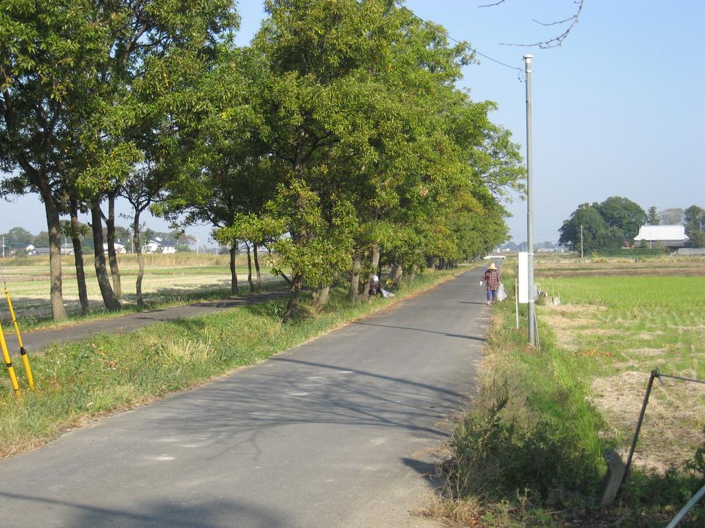 「秋」 くぬぎ並木道