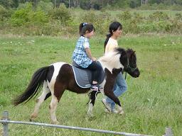 ポニー乗馬(鳥海高原菜の花まつり)
