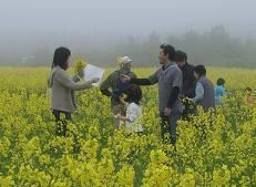 菜花摘み取り体験(鳥海高原菜の花まつり)
