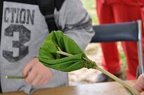 環境学習会(鳥海高原菜の花まつり)
