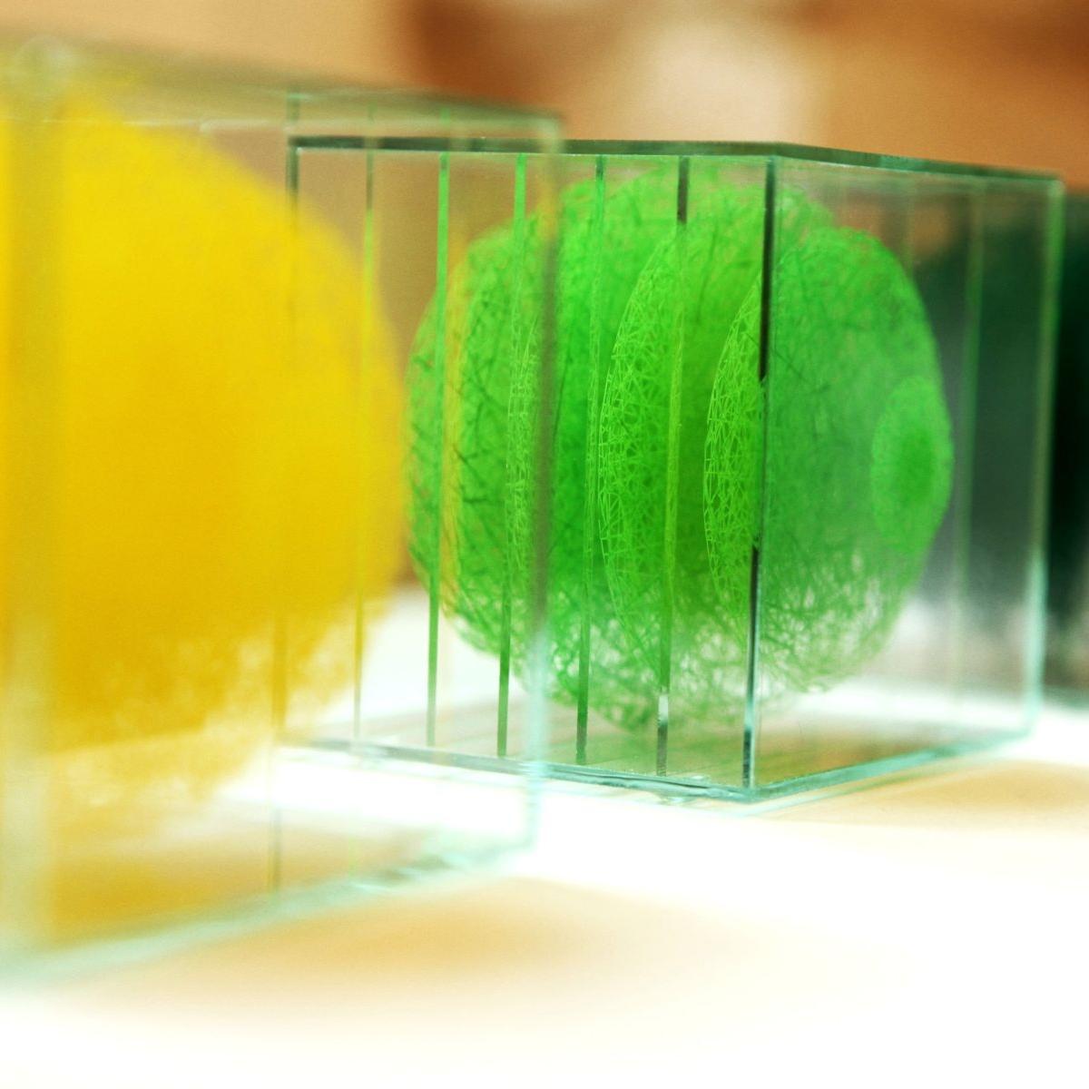 monyalos-jaune-vert. Sébastien Créteur