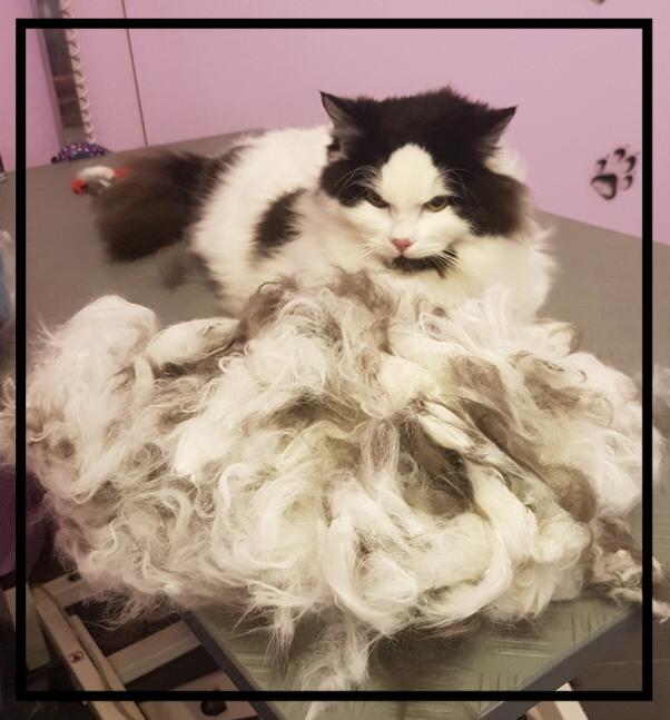 Alles rausgekämmt, eine 2.Katze ist entstanden😉