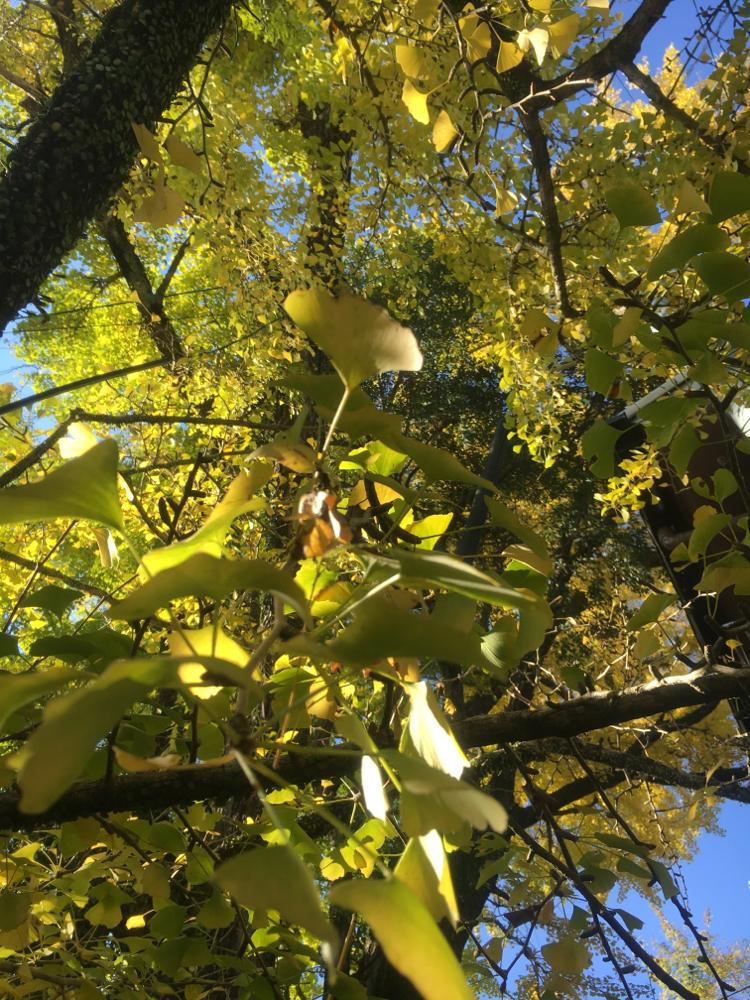 御神木の紅葉🍁