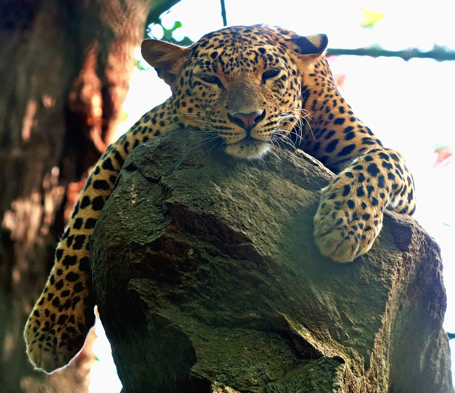 Banarghatta National Park