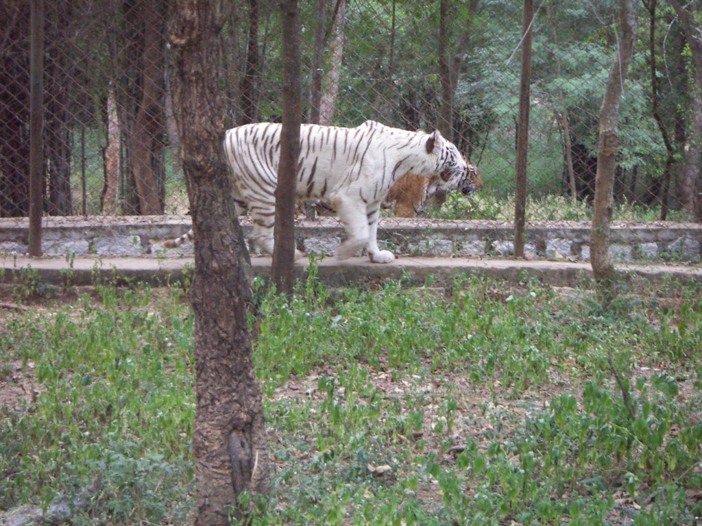Banarghatta National Park