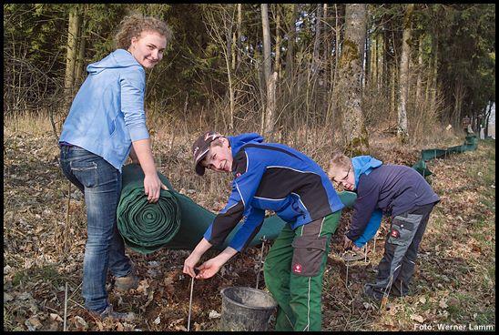 Fleißige Helfer bauen wieder den Amphibienzaun entlang der Landesstraße bei Goldhausen auf.
