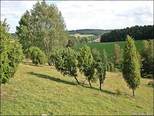 Halbtrockenrasen mit einzelnen Wacholdern und Solitärbäumen, Foto: Dieter Bark
