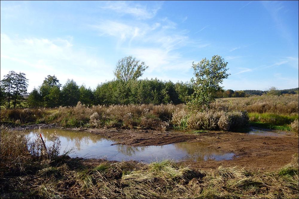 Zusätzlicher Feuchtbereich für Limikolen unterhalb des Teiches