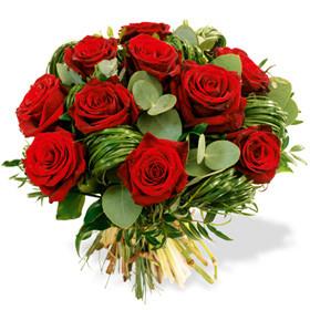 Rose rouge à gros bouton avec un jeu de feuillage