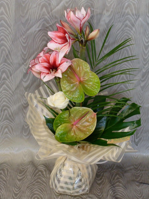 BE5-amaryllis strié rose, anthurium vert, rose blanche