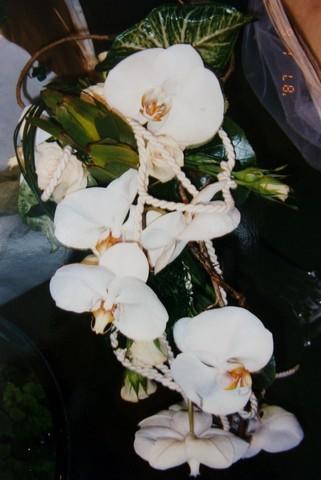 BCM13-Le Bouquet Chute de la Mariée