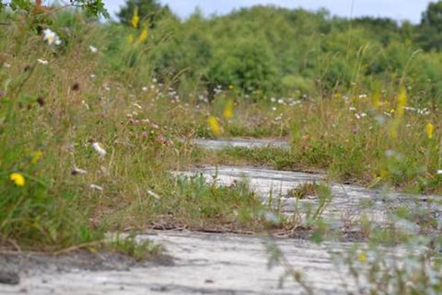 Die Natur überwuchert alte Wege und holt sich die Lebensräume zurück (Foto: Thomas Coldewey, von der Homepage des BUND KG Friesland)