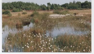 Das Moor ist dank unserer Arbeit wieder schön nass.