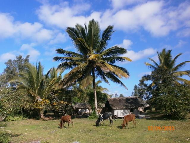 Village de la Côte Est Malagasy