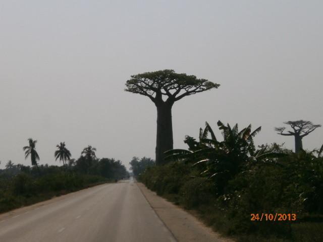Sur la route de Morondava