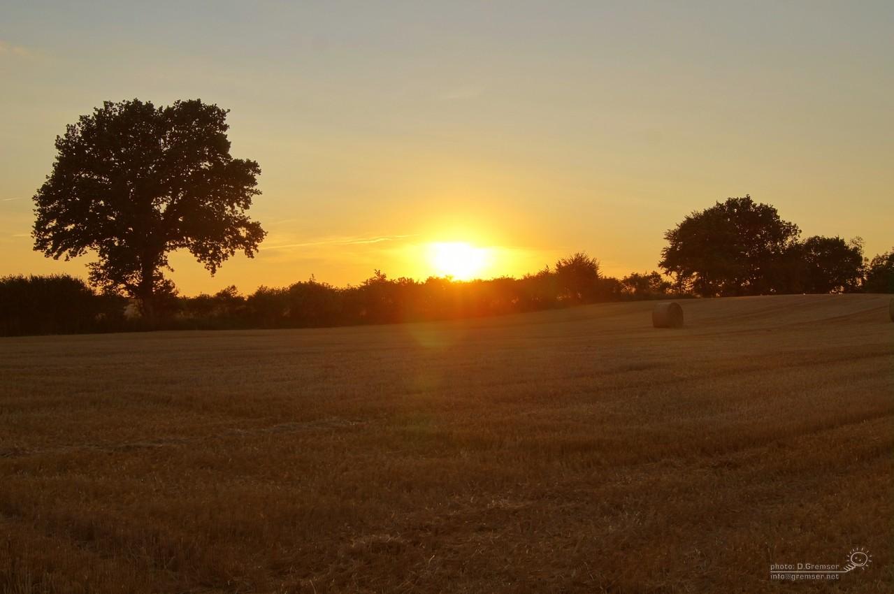 Sommerliche Felder um Löja