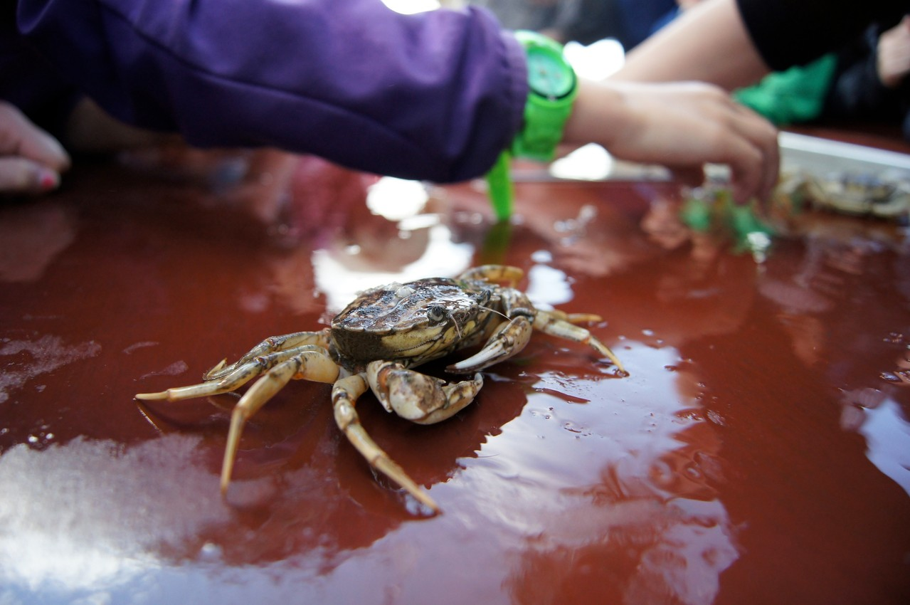 Krabbenkontakt in Tönning