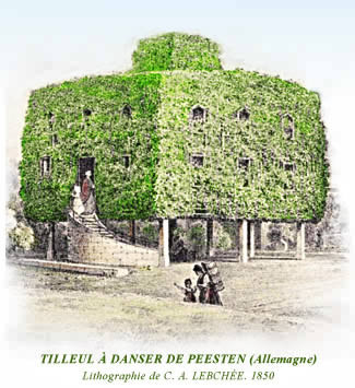 La Chanson de l'ancien Tilleul Image
