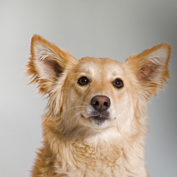 Elsa - Straßenhund, weiblich geboren 2010 in Hurghada, Ägypten. Eigenschaften: offen, gesprächig und stets auf Körperkontakt bedacht. Elsa ist die Tochter von Liza.