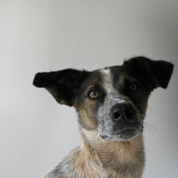 Festus - Straßenhund, männlich, geboren 2008 in Hurghada, Ägypten