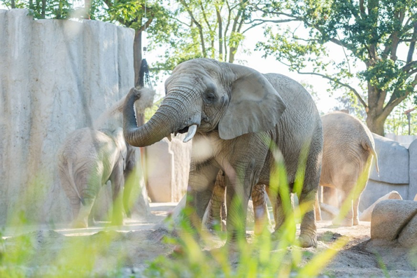 Elefantenanlage Tembea 2