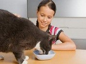 TO FEED THE CAT
