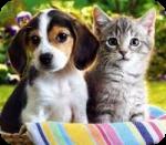 Si tuvieras que elegir, ¿cúal elegerías, gato o perro?